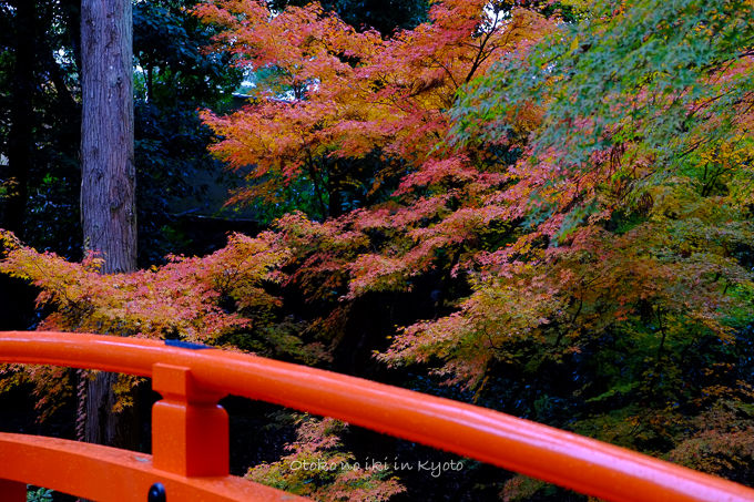 11月京都2012北野天満宮-34