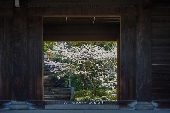 0407京都4月-26