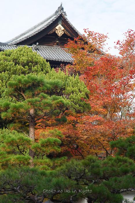 1108京都11月-20