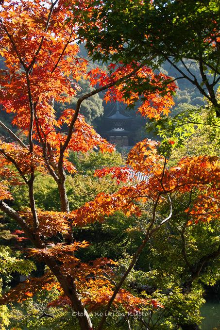1116京都-7