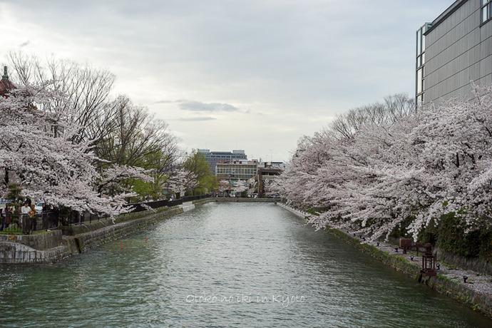 0407京都4月-110