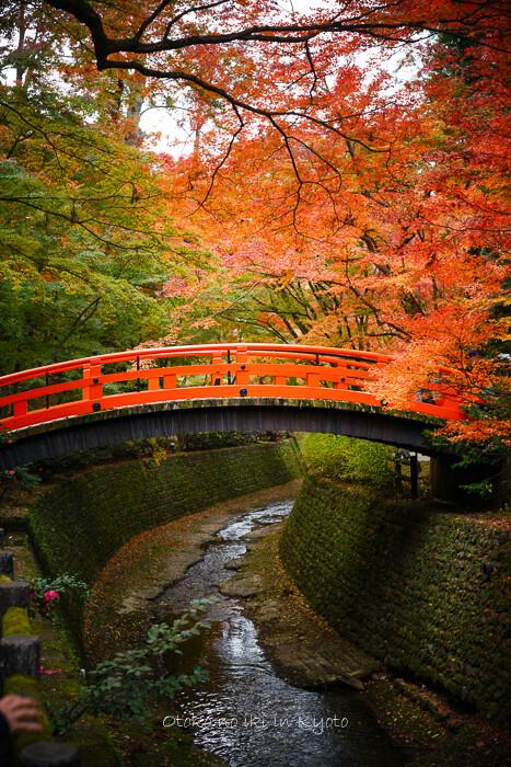 そうだ京都いこう20192019-226