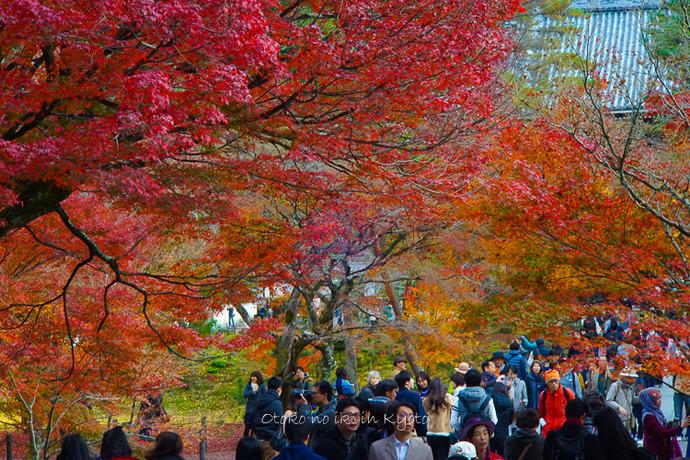 京都1125朝11月-5