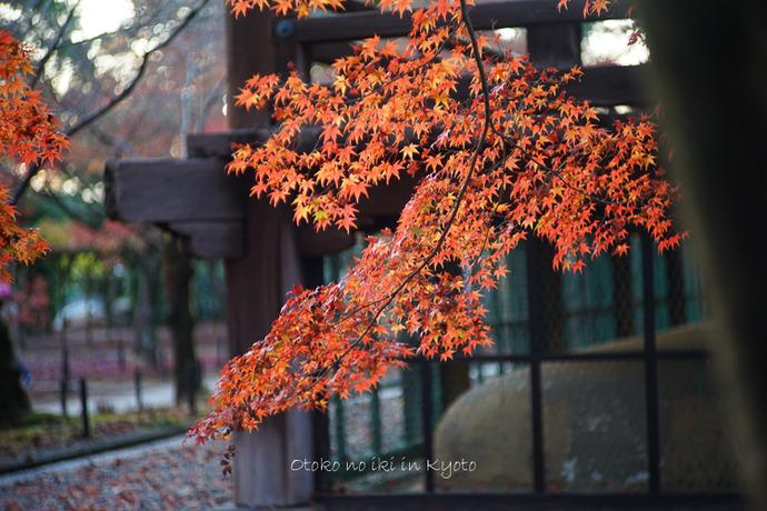 京都112511月-29