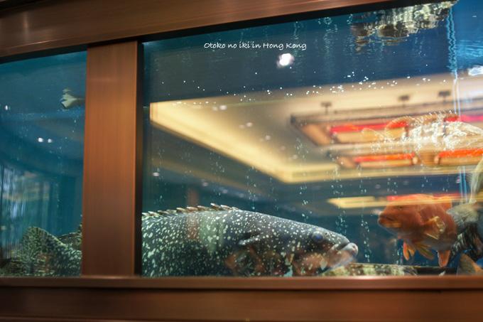 0305-25魚