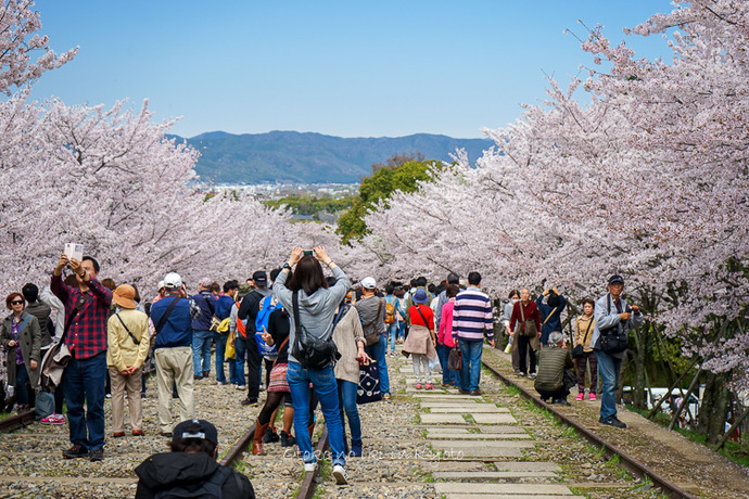 0407京都4月-48