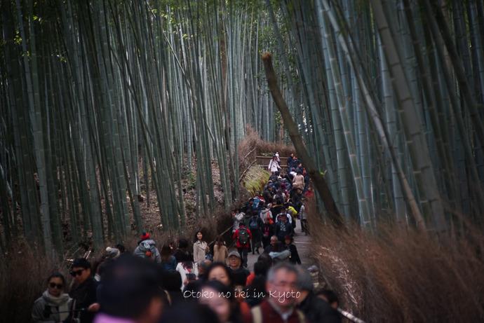 1124京都11月-8