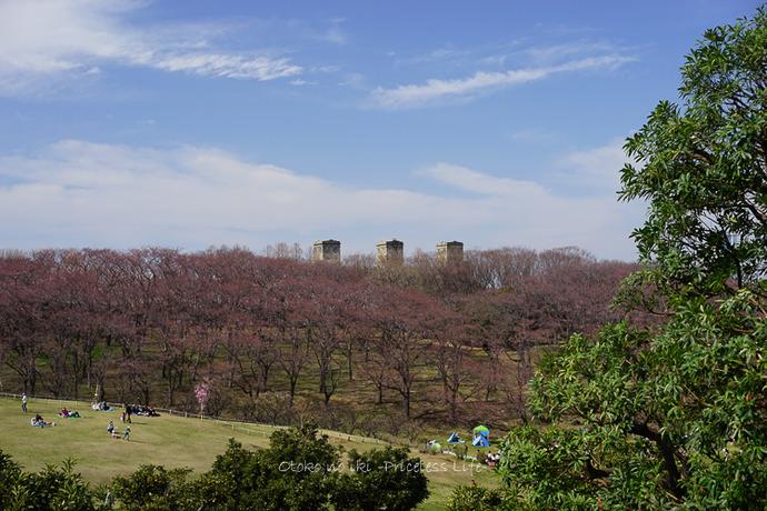 0330桜23月-33