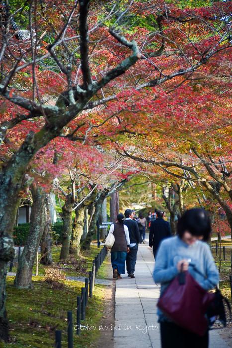 1108京都11月-43