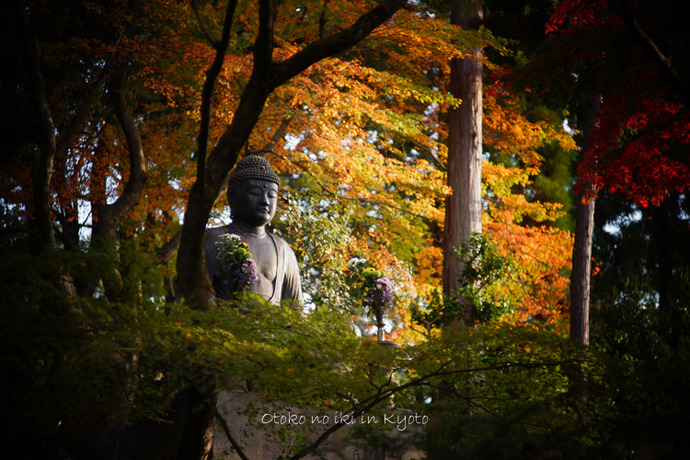 1108京都11月-54