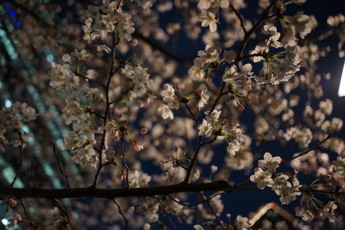 0401桜3