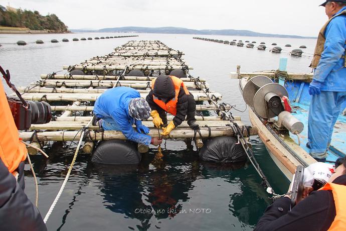 1110牡蠣漁2016-6