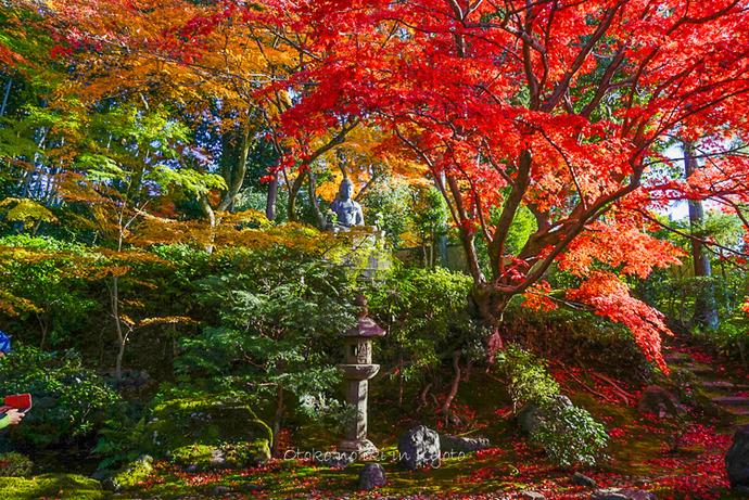 1123京都11月-16