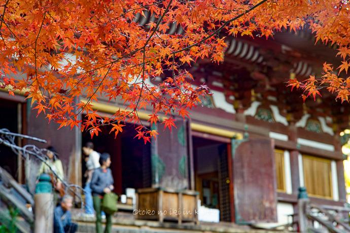 そうだ京都いこう20192019-82