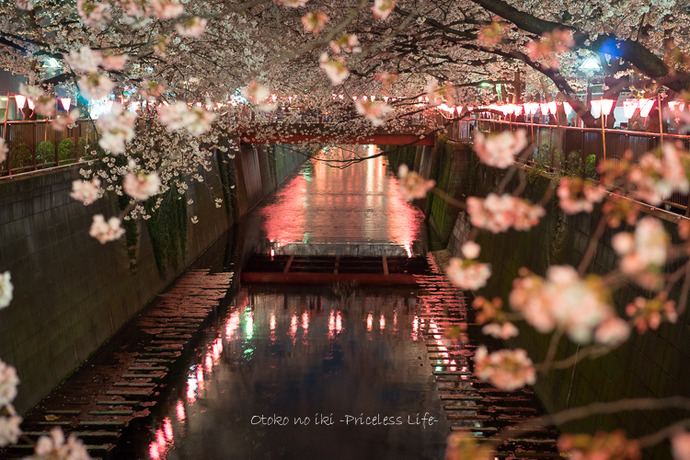 0330桜23月-57