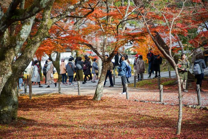 京都1125朝11月-10