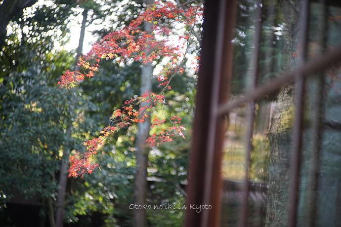 1108京都11月-16