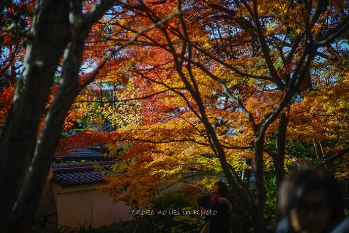 1123京都11月-12