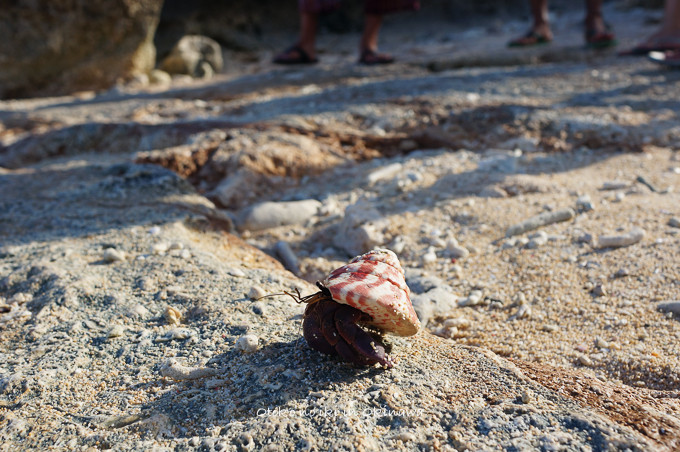 0409サンゴの浜9月-11