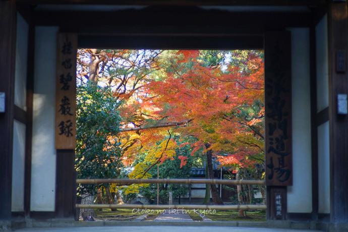 そうだ京都いこう20192019-24
