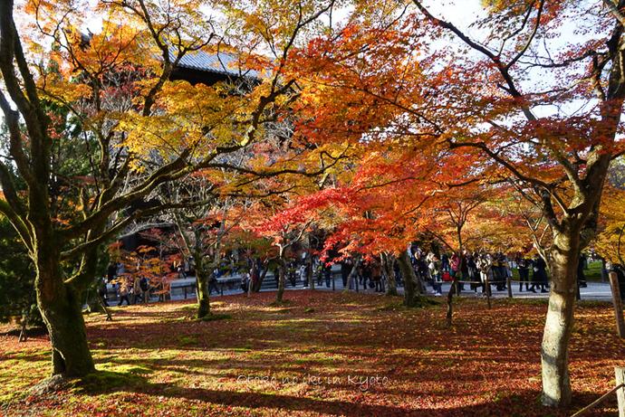 1123京都11月-19