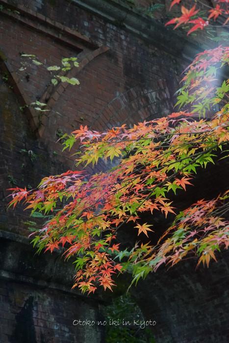 1108京都11月-37