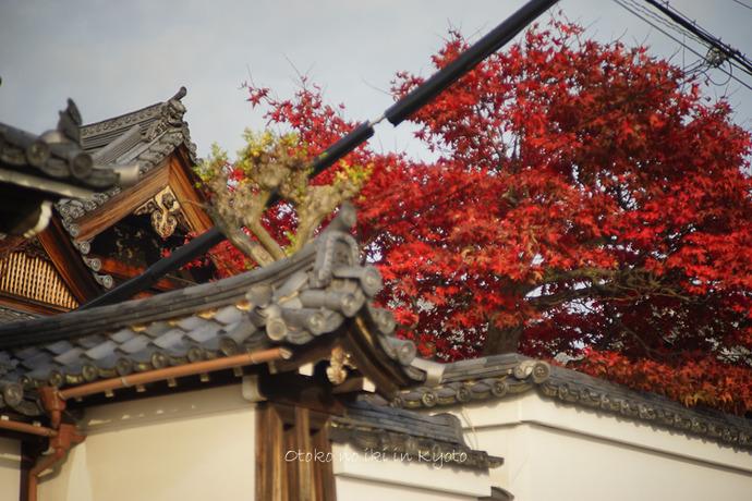 1108京都11月-39