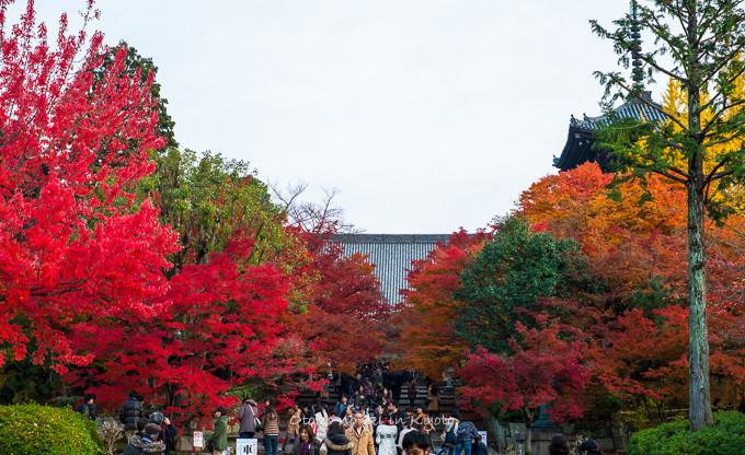 0404京都紅葉11月-29