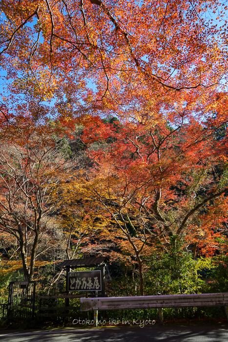 そうだ京都いこう20192019-56