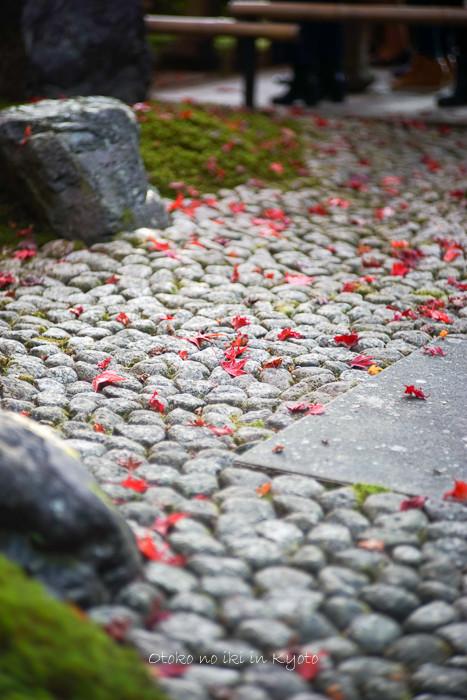 1108京都11月-52