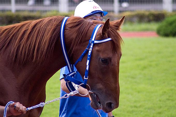 TCK牝馬