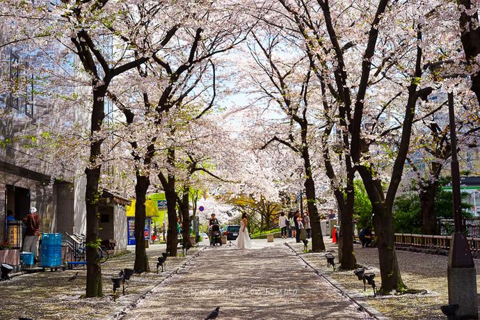 0407京都4月-5