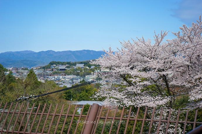 0407京都4月-53