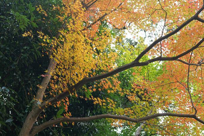 1112京都_2_11月-11