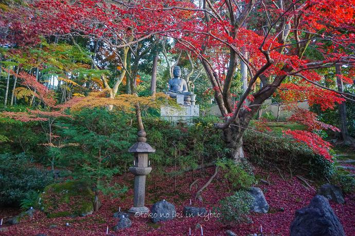 京都112511月-2