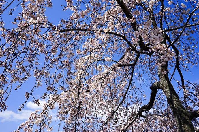 0329京都3月-22