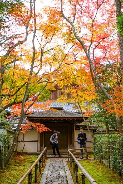 そうだ京都いこう20192019-235