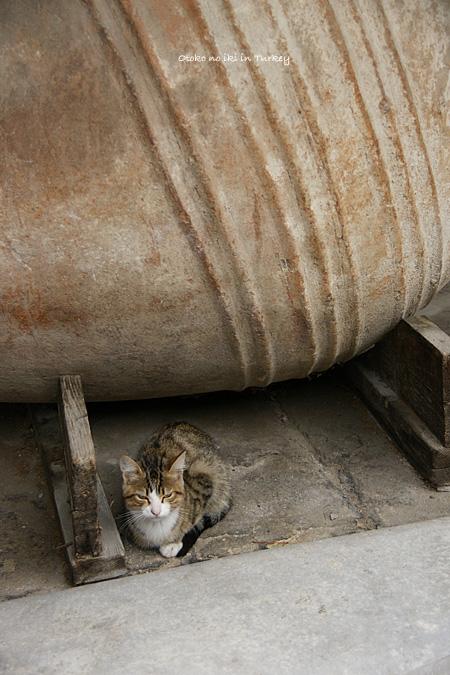 0223-3博物館猫