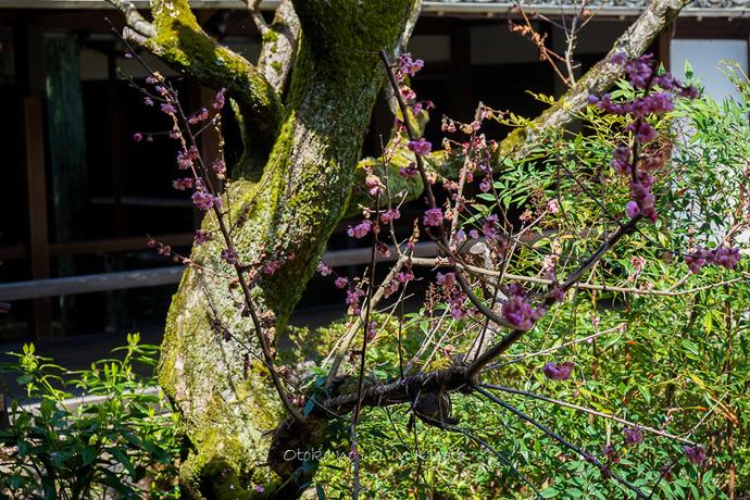 0407京都4月-36