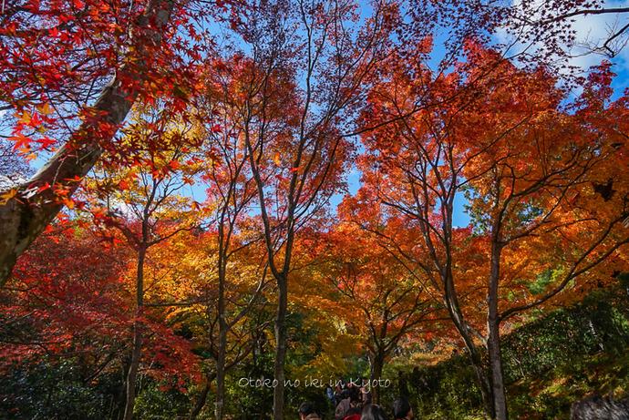 1124京都11月-10