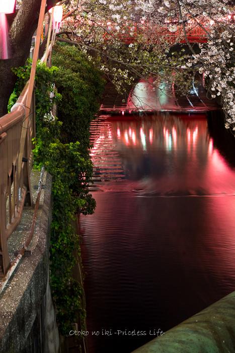 0330桜23月-72