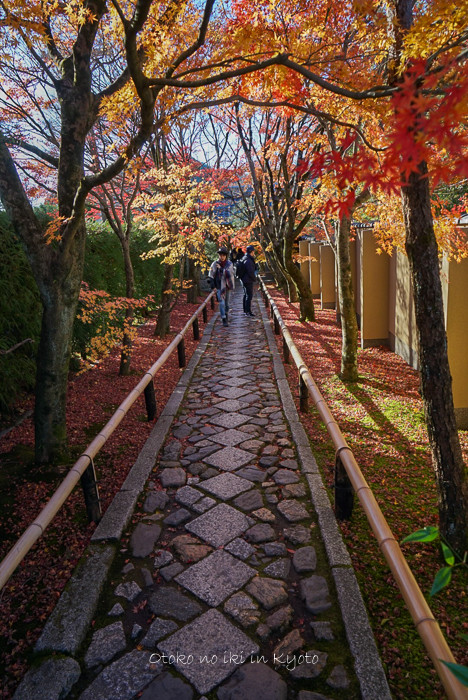 1124京都11月-3