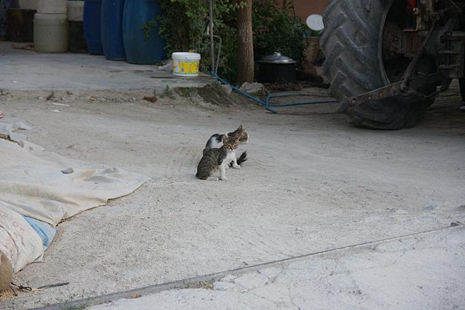0223-12仔猫