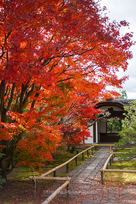 そうだ京都いこう20192019-232