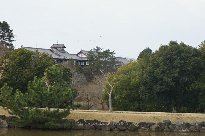 奈良2020-36