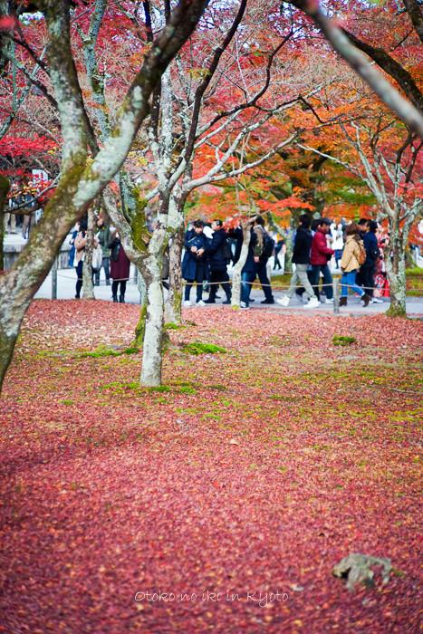 京都1125朝11月-11