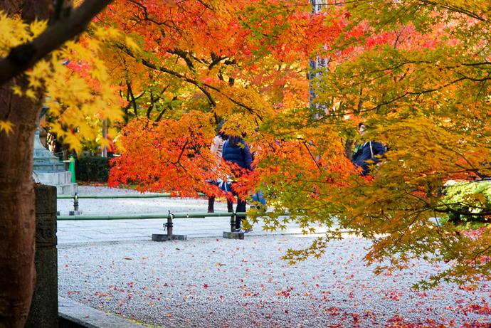 1124京都11月-21