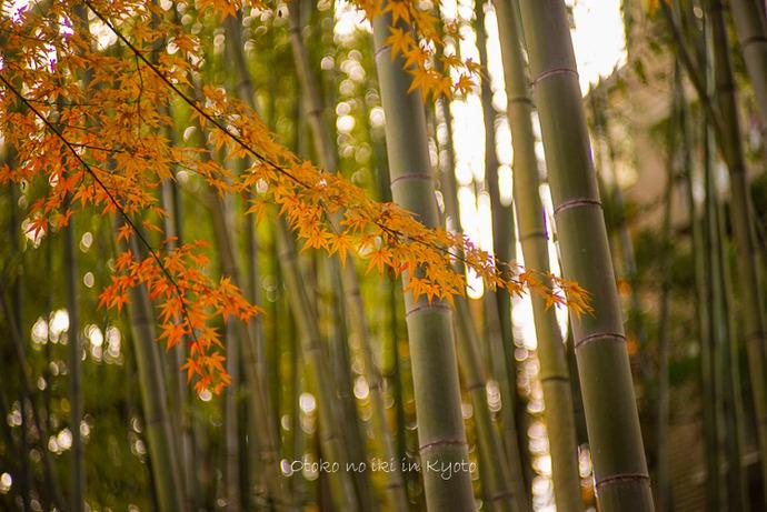 1123京都11月-10