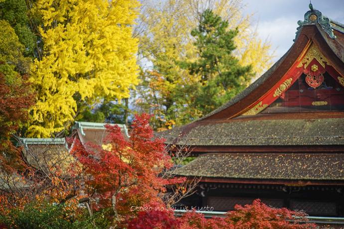 1123京都11月-5
