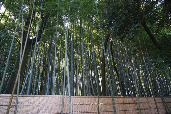 0402京都3月-168
